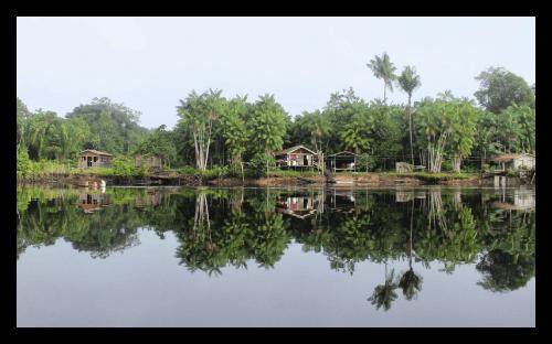 Regenwaldschutzprojekt