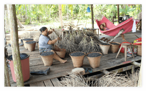 Verwertung von Acai Beeren